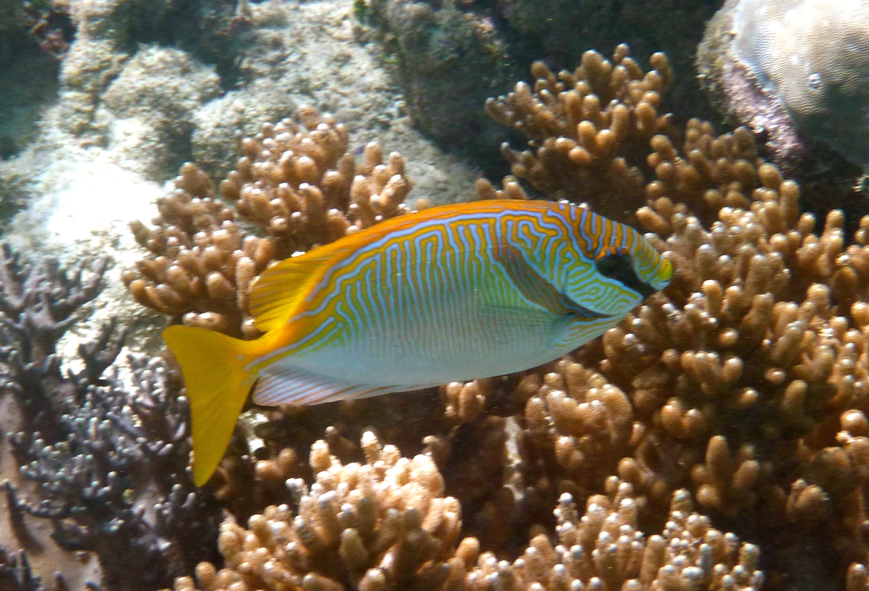 J28 et J29 : La Grande barrière de corail